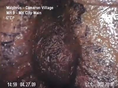 A screen grab of a video of bryozoan found in a private sewer beneath Cameron Village. The video has grabbed widespread attention across the Internet. (Source: YouTube)