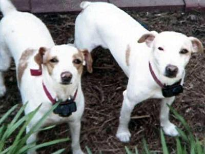 Joyce Valentine says she returned home from work to find her 4-year-old Jack Russell terriers, Missy and Buster, mauled to death.