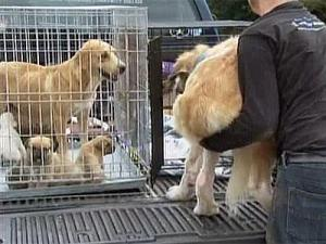 Authorities seized about 27 dogs from a Garner residence Wednesday morning.