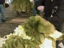 State Fair starts with tobacco curing