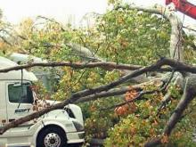 Tree falls on tractor-trailers at rest stop