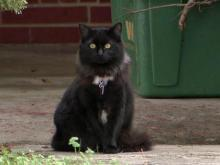 The Clayton Town Council is expected to amend a town ordinance exempting cats from a ban on domestic animals roaming freely in the town.