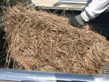 Raleigh homeowners feel safe with pine straw