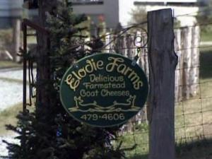 State agriculture officials are testing animals at Elodie Farms in Rougemont after a dead donkey tested positive for rabies.