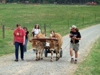 Visitors watch cows pass during at the Chapel Hill Creamery during the Piedmont Farm Tour on Saturday, April 24, 2010.