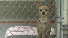 IMAGE: Puppy mill regulation to return to lawmakers' agenda