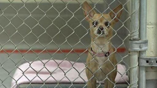 A dog awaits adoption at the Wake County Animal Care, Control and Adoption Center.