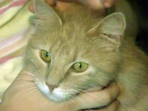 Cat returns home to Fayetteville