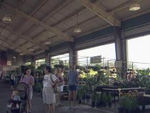 Covered stalls in high demand at Farmers Market