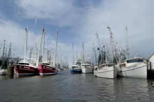 The harbor at Oriental was crowded with boats on Sunday, July 18, 2010. (Photo by Ben Casey)