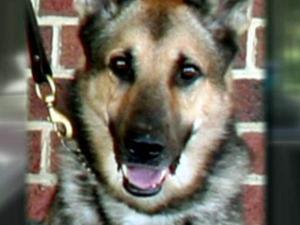 Dan, a 7-year-old German shepherd, was found dead Tuesday, July 27, 2010, in Roanoke Rapids.