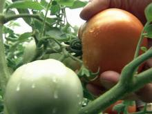 Community garden helps those in need