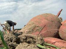 Farmers face growing problem