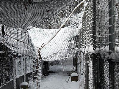Aviaries at the Sylvan Heights Waterfowl Park in Scotland Neck were damaged by a Dec. 26, 2010, snowstorm that killed 16 wild birds at the sanctuary and an adjacent breeding center.