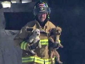 A firefighter carries dogs out of Puppy Paradise in Selma Wednesday, Dec. 29, 2010, after a fire.