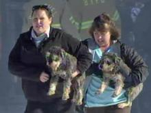 Dogs are carried out of Puppy Paradise in Selma Wednesday, Dec. 29, 2010, after a fire.