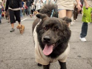 A walk participant strides into the camera lens during the SPCA of Wake County's K9-3K in downtown Raleigh.
