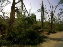 Storm damage on Marlborough Road, Raleigh
