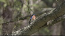 IMAGES: RTP makes homes for bluebirds