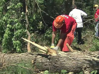 Volunteers from North Carolina Baptist Men Disaster Relief help tornado victims by cutting up trees and carrying them away.