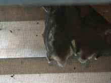Bats make a home in Knightdale