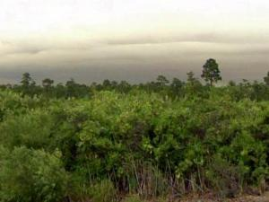 A lightning strike on June 18, 2011, sparked a wildfire in the Holly Shelter Game Land area of Pender County.