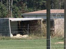 Animals group faults sheriff in animal  neglect case