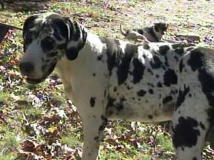 Three men posing as Moore County Animal Control officers tried to steal Freckles.