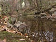 Man found dead in Chapel Hill creek