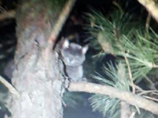 A cat stuck in a tree in Sanford has neighbors concerned.