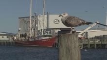 NC coastal fishermen: Oregon Inlet problems 'devastating'