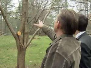 Garry Hoover is upset after Progress Energy cut down his trees without his knowledge.