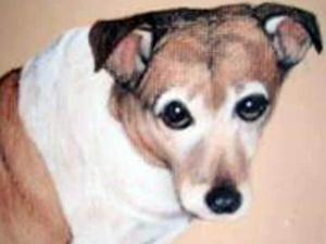 Laci, a 12-year-old Jack Russell terrier that died in 2007, is at the heart of a legal case that could decide the value of a pet in North Carolina.
