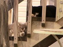 Wake County being sued over stray cats