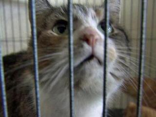 A cat at the Johnston County SPCA in Clayton on March 5, 2012.