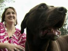 Dog mauled by wild animal in Wendell