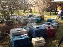 More than 80 dogs were seized from this Jones County property on March 14, 2012. (Image courtesy of WNCT-TV)