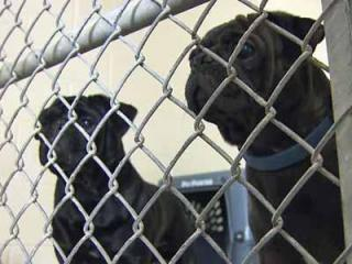 Authorities rescued at least 80 dogs from a suspected puppy mill at a rural Jones County property on March 14, 2012.