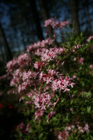WRAL Azalea Garden on March 27, 2012