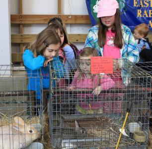 Children look at rabbits at NC State Farm Animal Days.