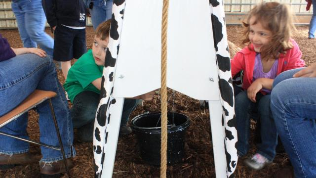 Children get a lesson in how to milk a cow at NC State Farm Animal Days.