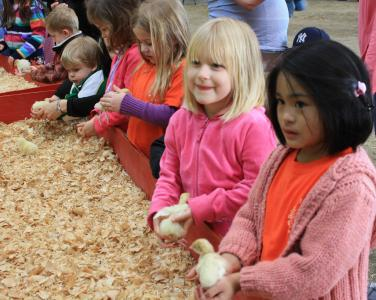 Children play with baby chicks at NC State Farm Animals Days.