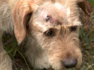 Vance County animal control officers said Thursday that they are pressing criminal charges against a man who shot a dog in Kittrell last week.