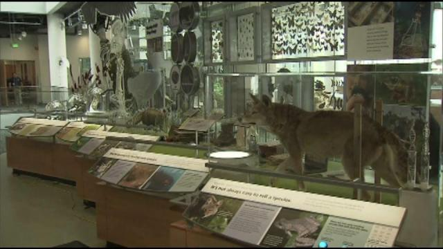 Animal specimens are lined up inside the Nature Research Center at the NC Museum of Natural Sciences.