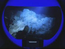 tank of coral