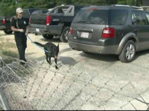 People and cadaver dogs joined the search for Pfc. Kelli Bordeaux Saturday.