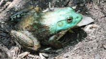 NC Zoo to celebrate Amphibian Awareness Day