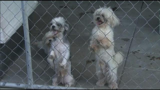 Dogs were caged and living in filth and insects at a home in Brunswick County.