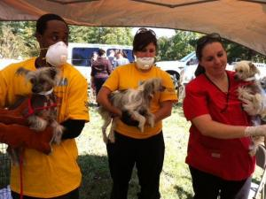 Workers assist with an animal hoarding rescue at a home in Rougemont. Photo courtesy of The Humane Society of the United States.