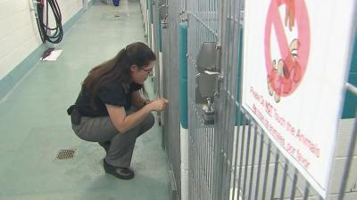 Jennifer Federico, a veterinarian who is the new director of the Wake County Animal Center, checks on one of the dogs in the shelter.